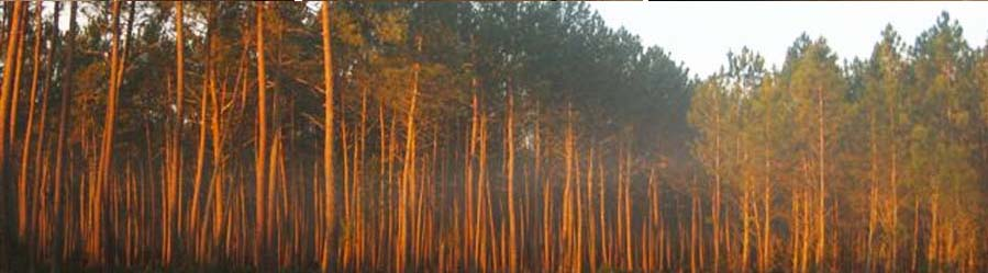 HURFORD BOIS, fournisseur de bois résineux et feuillus